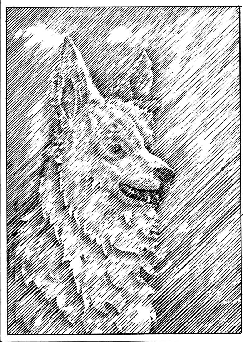 flo kanban illustration jeunesse trait anglais chier berger blanc