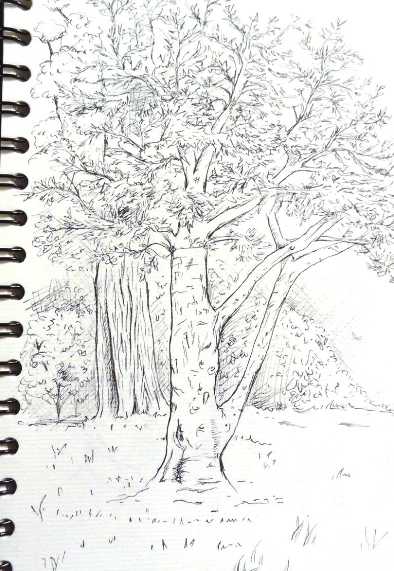 flo kanban illustration jeunesse carnet croquis arbre de vie