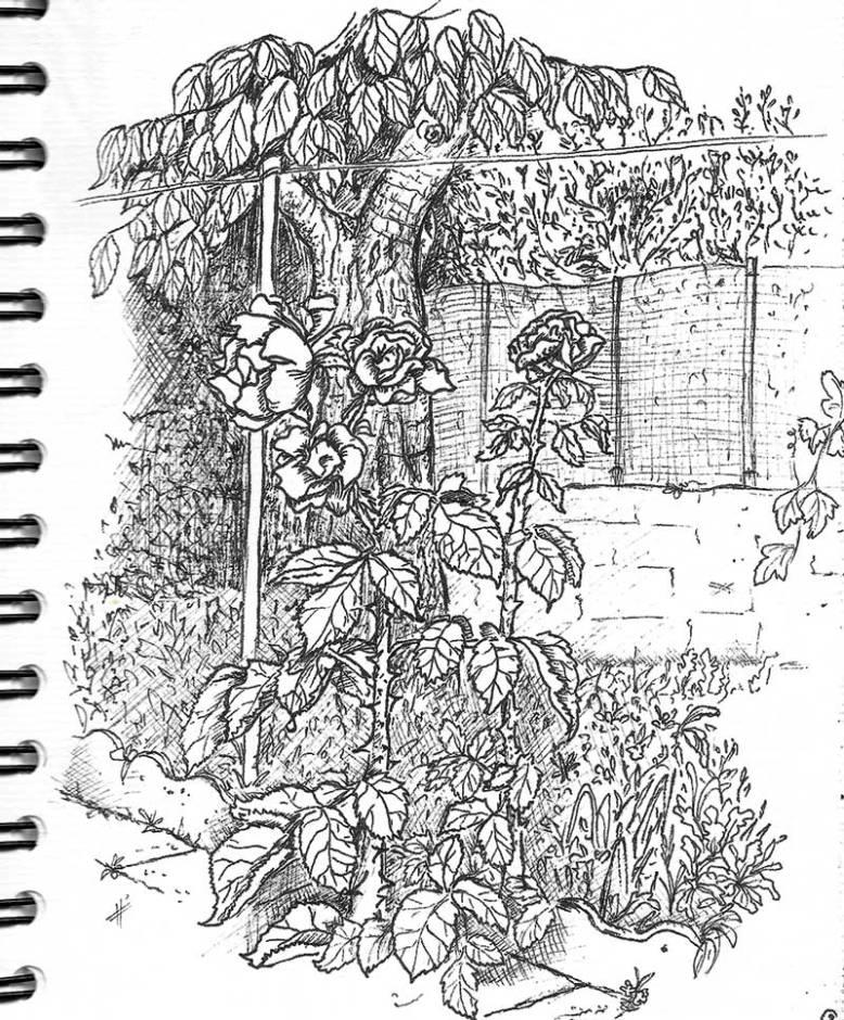 flo kanban illustration jeunesse carnet croquis jardins rose
