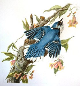 flo kanban illustration jeunesse L'oiseau bleu