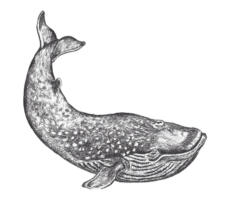 Flo kanban illustration jeunesse Baleine