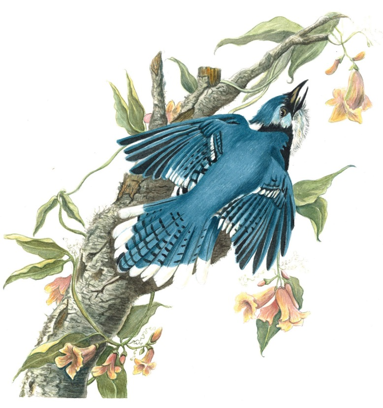 Flo kanban illustration jeunesse blue jay