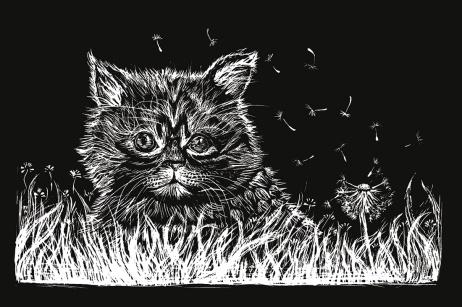Flo kanban illustration jeunesse chat carte à gratter