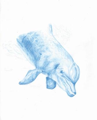 Flo kanban illustration jeunesse Dauphin