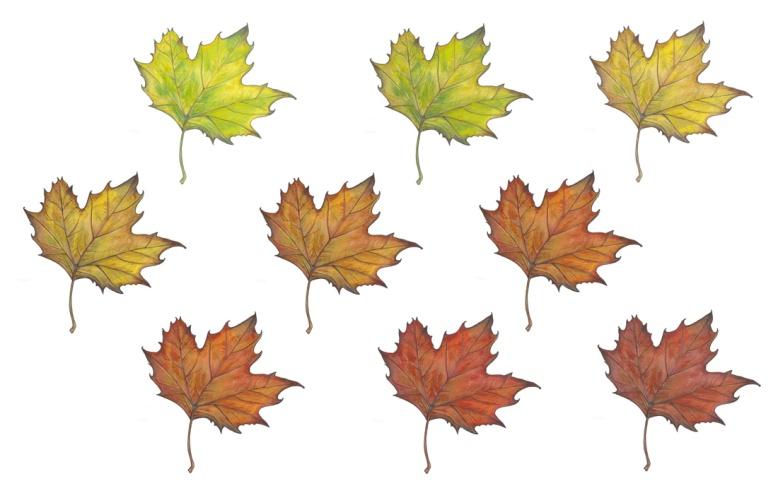 Flo kanban illustration jeunesse Feuille d'automne