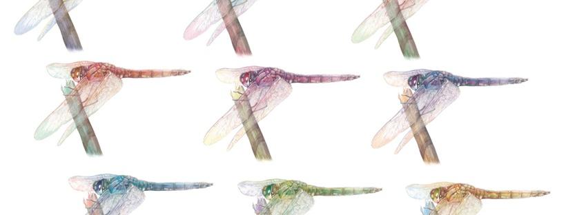 Flo kanban illustration jeunesse libellule pop art