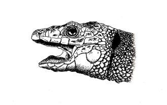 Flo kanban illustration jeunesse serpent