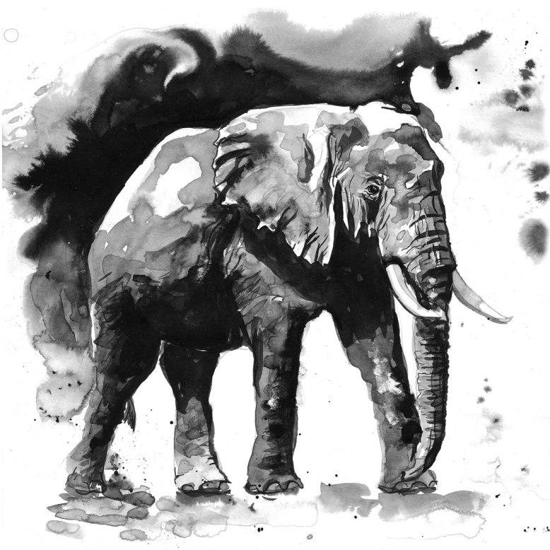 Flo_Kanban_illustratrice_N&B_encre_elephant