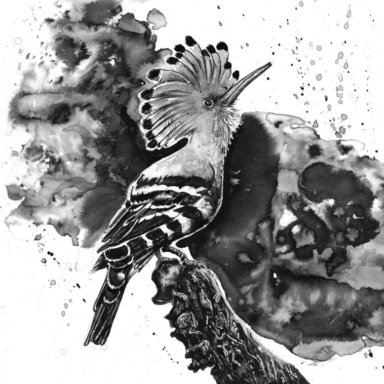 Flo_Kanban_illustratrice_N&B_encre_Huppe-fasciée