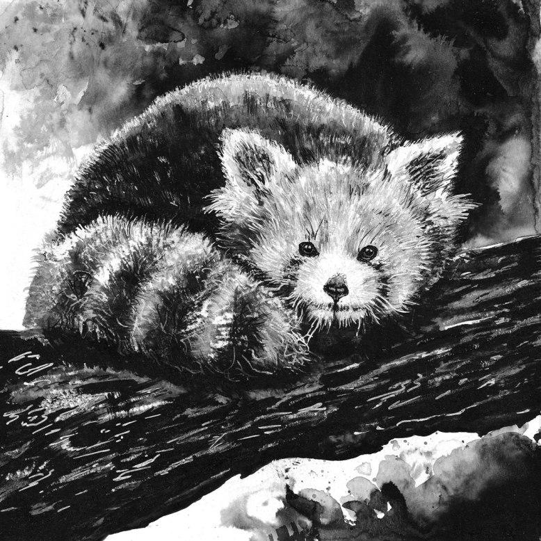 Flo_Kanban_illustratrice_N&B_encre_panda-roux