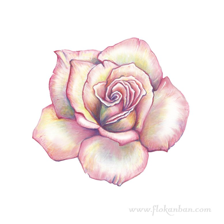 Flo_Kanban_illustratrice_Rose